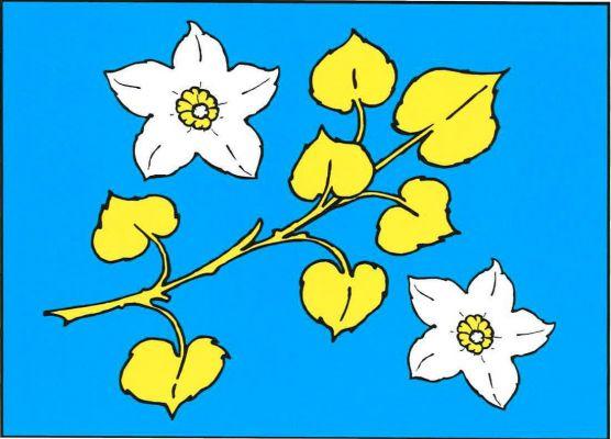 Kochánov - vlajka